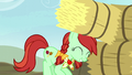 Candy Apples passes hay bale on to Apple Cinnamon S5E6.png