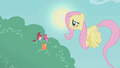 Fluttershy embarrassed S01E07.png