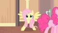 Fluttershy enters the room S4E08.png
