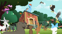 Rainbow Dash and the animals S2E07