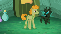 Stallion looks at changeling S5E26