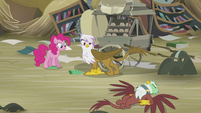 Pinkie and Gilda sees Greta on the ground S5E8