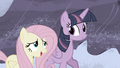"""Fluttershy """"I know they can do it!"""" S5E2.png"""