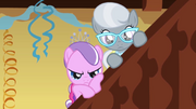 Silver and Diamond watching
