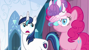 Flurry Heart on Pinkie's face S6E2