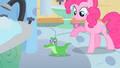 Pinkie Pie introduces Gummy S1E15.png
