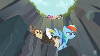 Rainbow Dash pets cliff S2E07