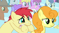 Earth pony stallion biting his hooves S4E24.png