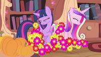 Flowers landing onto Twilight and Cadance S4E11