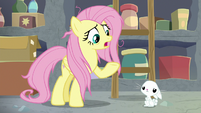 "Fluttershy ""we can't go on like this"" S9E18"