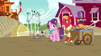 Older Big Mac and Sugar Belle on the farm S9E26