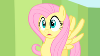 Shocked Fluttershy S1E20