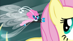 Seabreeze flapping in Fluttershy's mane S4E16