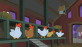 Startled chickens S01E17.png