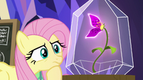 Fluttershy looking closely at the flower S9E22