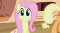 Fluttershy telling lesson S2E03.png