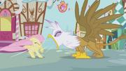 Gilda roaring at Fluttershy S1E5