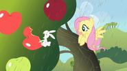 S02E01 Angel je jabłko