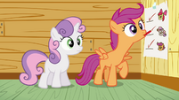 Scootaloo ticking at blank space S3E04