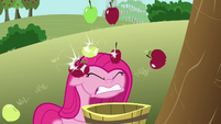 Pinkie Pie pummeled with apples S03E13