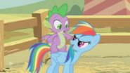 Rainbow Dash 'Ready for another pony ride ' S1E13