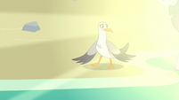 Seagulls sees ponies emerging from the sea S8E6