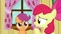 Apple Bloom --about what Crusaders can do-- S6E19