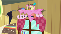 Owlowiscious with pink feathers S03E11