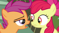 Scootaloo -we've got responsibilities now- S5E4