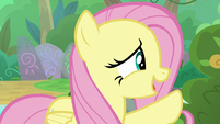 Fluttershy -time away to be a Nirik- S8E23
