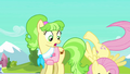 Fluttershy hits the floor S03E12.png
