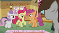 "Apple Bloom ""what do you say"" S5E18.png"