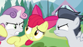 Apple Bloom holding Sweetie Belle back S7E21.png