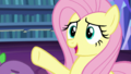 """Fluttershy """"everything is fine"""" S5E21.png"""