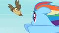 Rainbow Dash Owlowiscious 3 S02E07.png