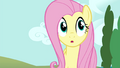 Fluttershy walks to Twilight and Rainbow S4E21.png