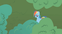 Rainbow Dash hiding in the tree S1E05