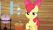 S04E15 Apple Bloom przy doniczce
