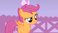 Scootaloo likes Fluttershy's idea S1E17.png