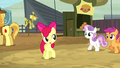 "Apple Bloom ""if we can get into some of these events"" S5E6.png"