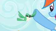Hummingbird high-fiving Rainbow Dash S2E07