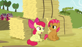 Apple Bloom 'wants this to be like a super-awesome reunion' S3E08.png