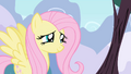 Fluttershy looking cute S1E1.png