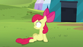 Apple Bloom sitting up and looking at Orchard Blossom S5E17.png