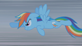Rainbow Dash charges at the dragon S01E07.png
