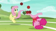 Fluttershy y Pinkie continuan divirtiéndose T6E18
