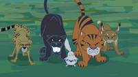 Jungle cats snarling S4E04