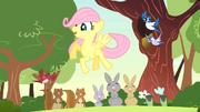 S01E23 Fluttershy ze zwierzątkami