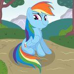 Rainbow Dash sitting