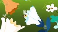 Bees close-up S1E23